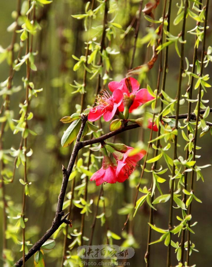 在花红柳绿的春天与你相遇 【原创散文】 - 高天流云 - 高天流云的博客