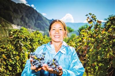 小小葡萄成就绿色大产业
